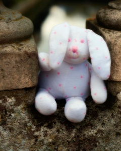 lost bunny by Andrea on Flickr